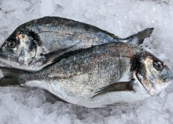 Trade in fish products